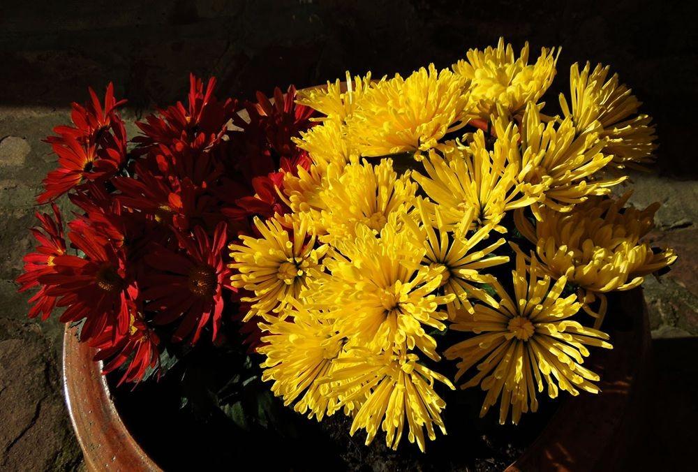 花卉日记-48_图1-9