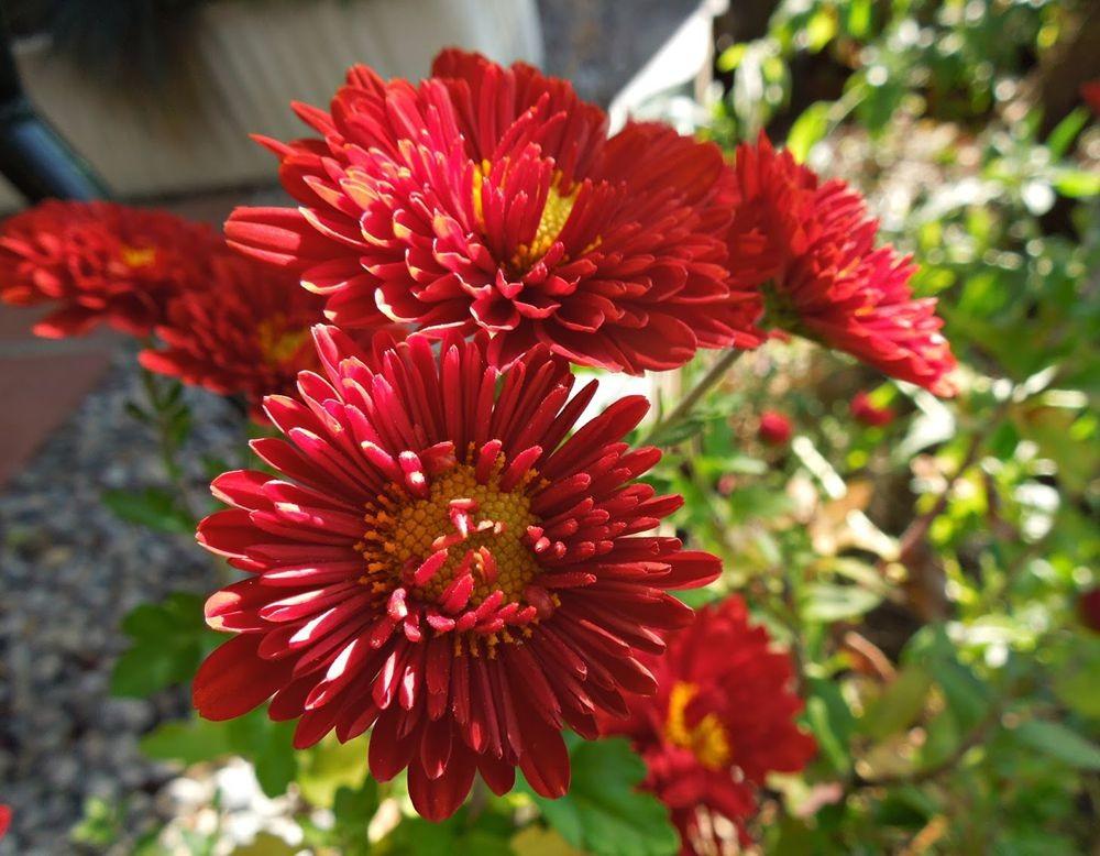 花卉日记-48_图1-10