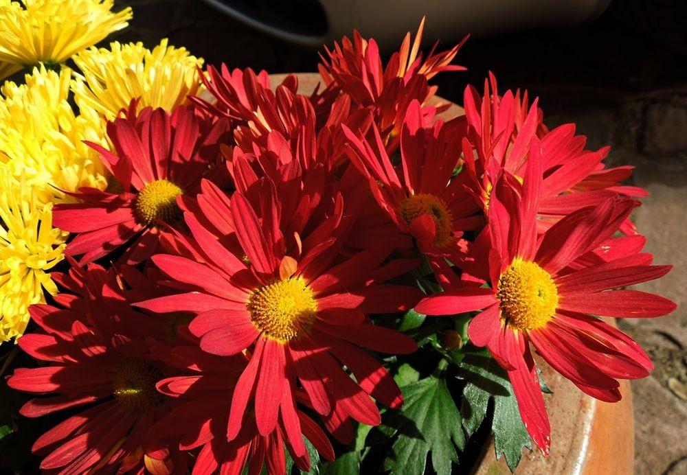 花卉日记-48_图1-11