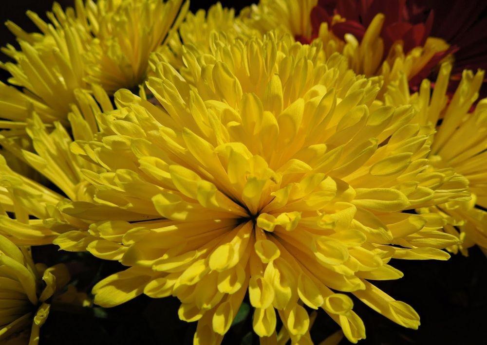 花卉日记-48_图1-12