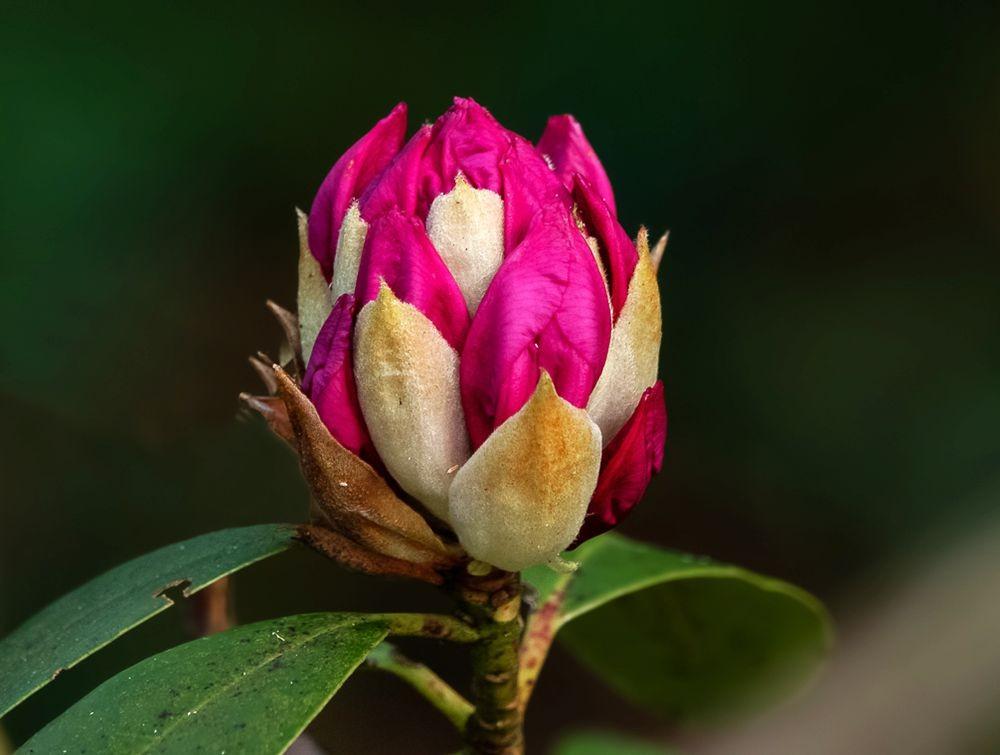 花卉日记-48_图1-13