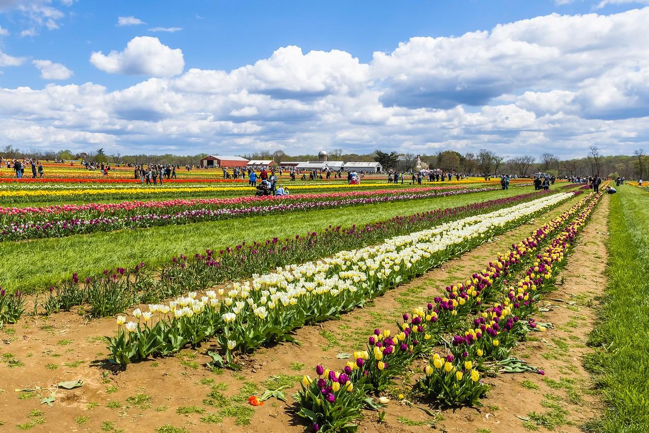 荷兰岭农场(Holland Ridge Farms, NJ),花的彩带_图1-23