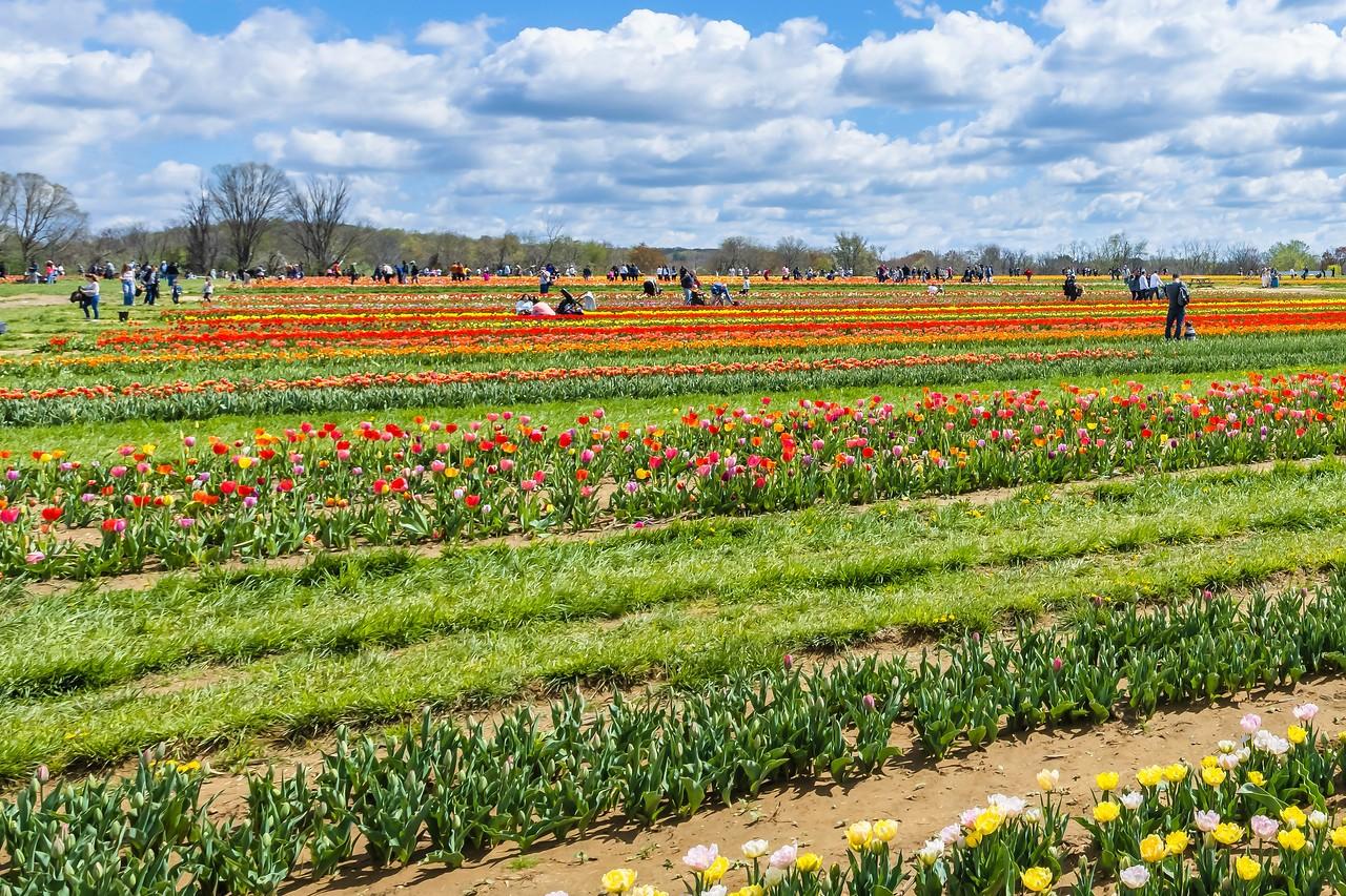荷兰岭农场(Holland Ridge Farms, NJ),花的彩带_图1-24