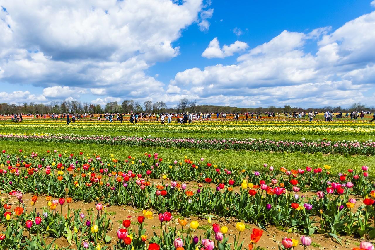 荷兰岭农场(Holland Ridge Farms, NJ),花的彩带_图1-21
