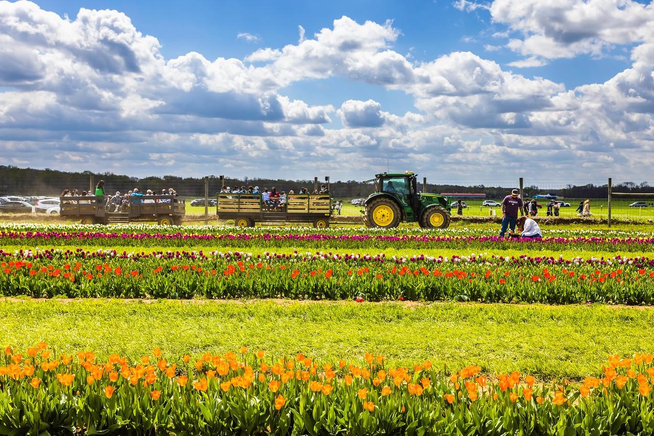 荷兰岭农场(Holland Ridge Farms, NJ),花的彩带_图1-22