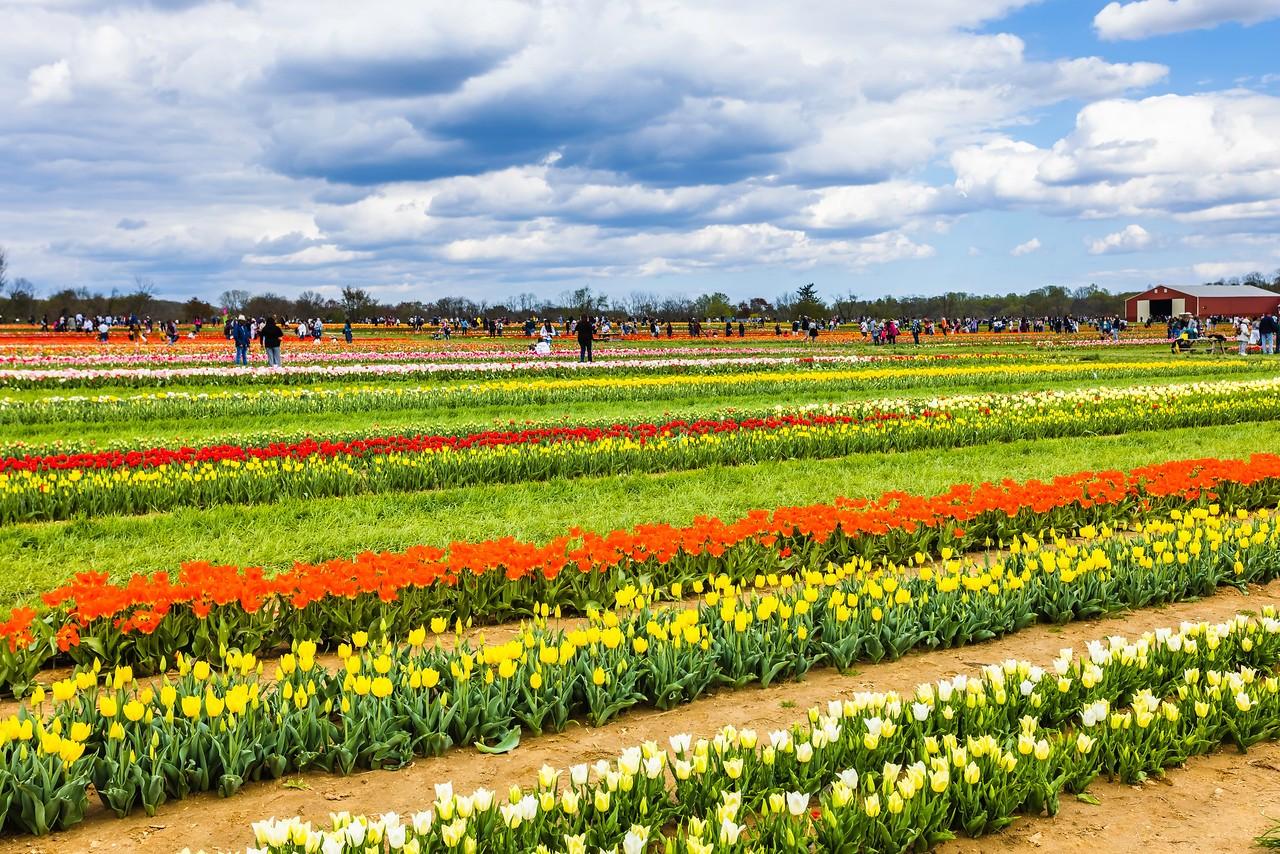 荷兰岭农场(Holland Ridge Farms, NJ),花的彩带_图1-19
