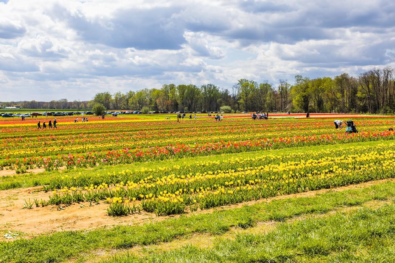 荷兰岭农场(Holland Ridge Farms, NJ),花的彩带_图1-17