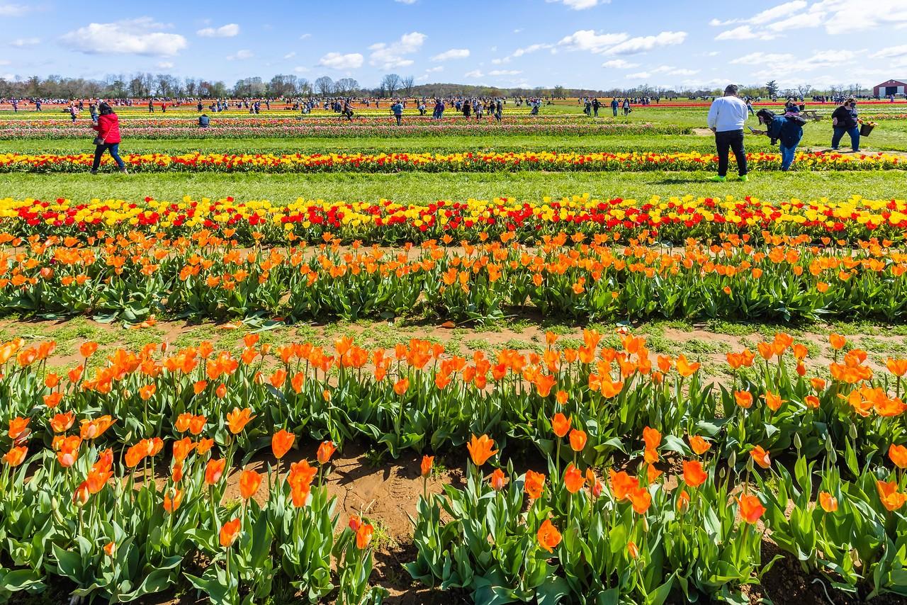 荷兰岭农场(Holland Ridge Farms, NJ),花的彩带_图1-18