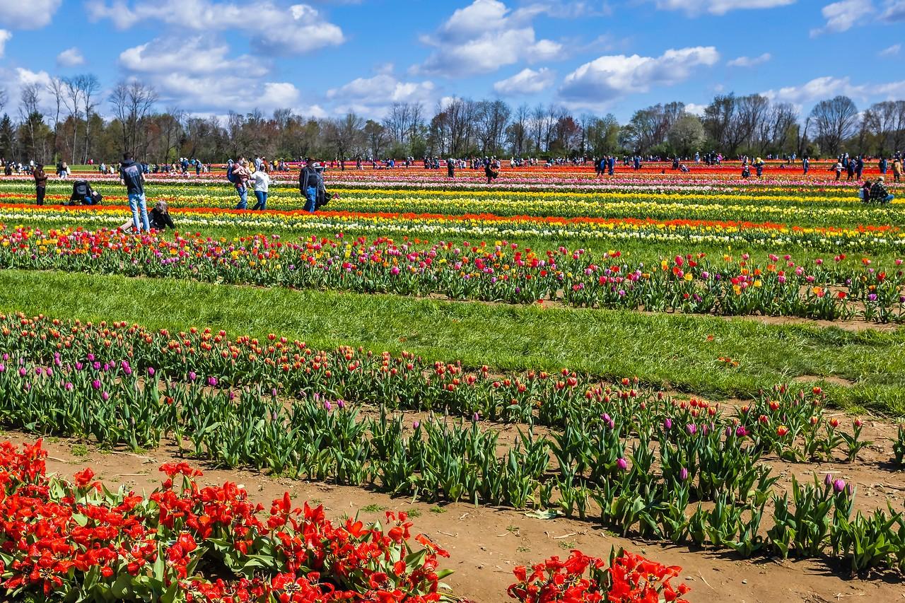 荷兰岭农场(Holland Ridge Farms, NJ),花的彩带_图1-13