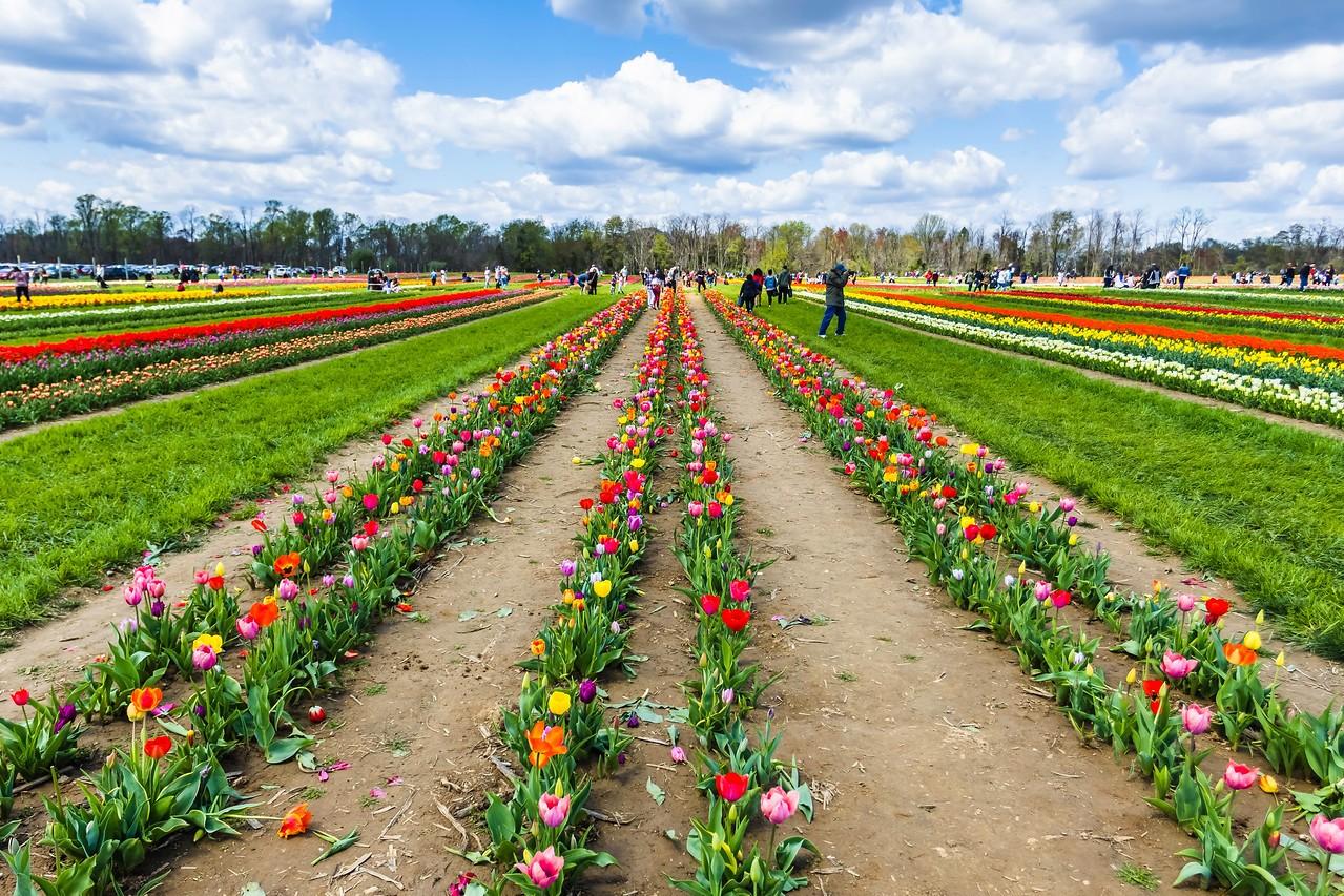 荷兰岭农场(Holland Ridge Farms, NJ),花的彩带_图1-14