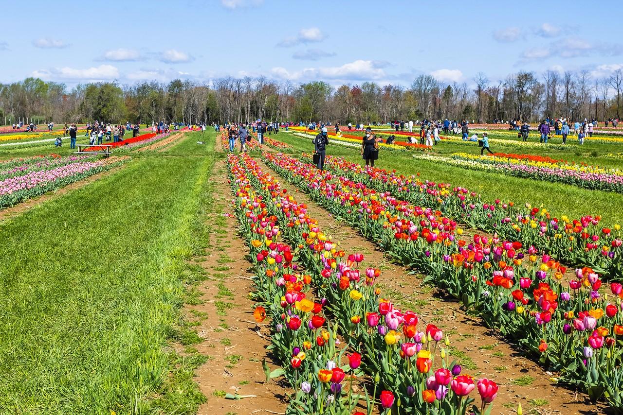 荷兰岭农场(Holland Ridge Farms, NJ),花的彩带_图1-12