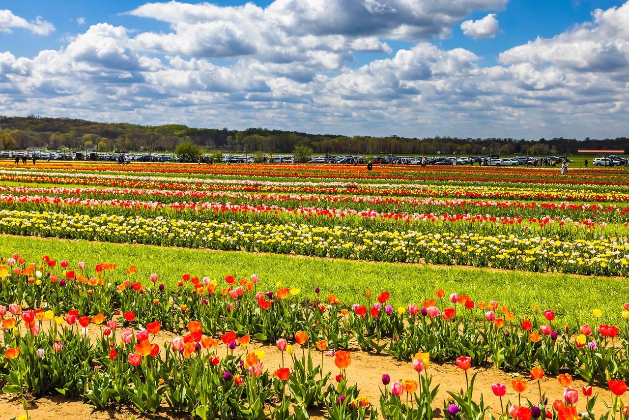 荷兰岭农场(Holland Ridge Farms, NJ),花的彩带_图1-16