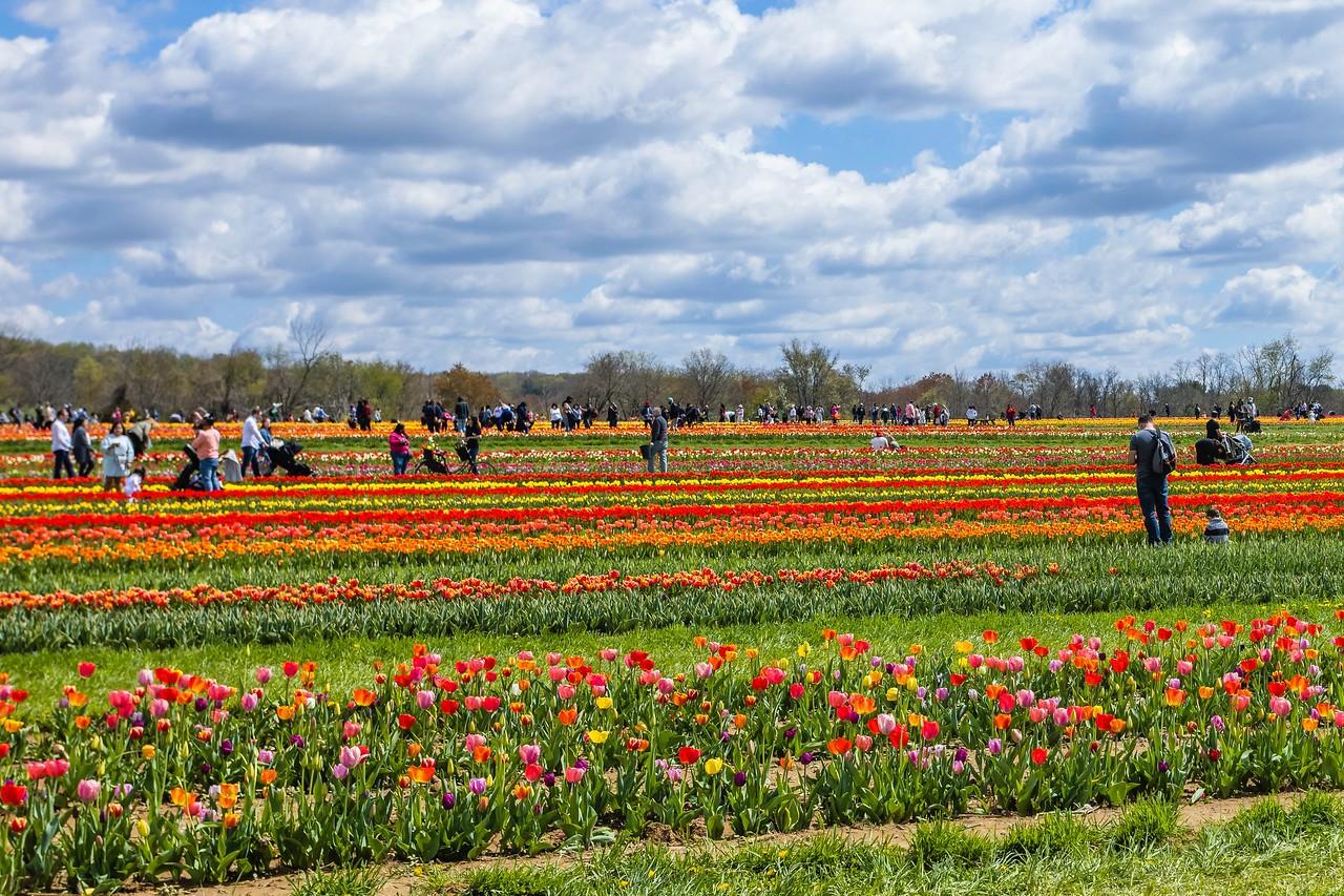 荷兰岭农场(Holland Ridge Farms, NJ),花的彩带_图1-15