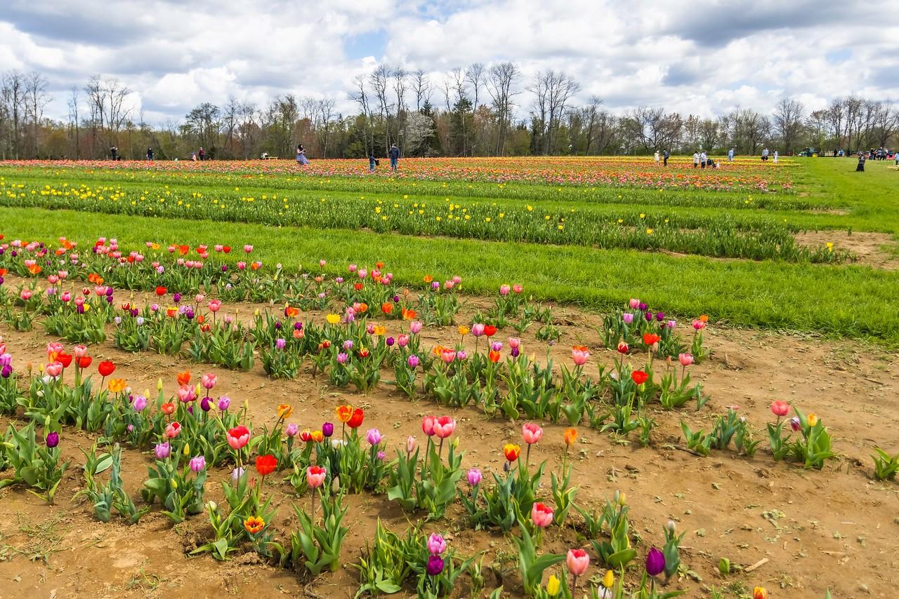 荷兰岭农场(Holland Ridge Farms, NJ),花的彩带_图1-10
