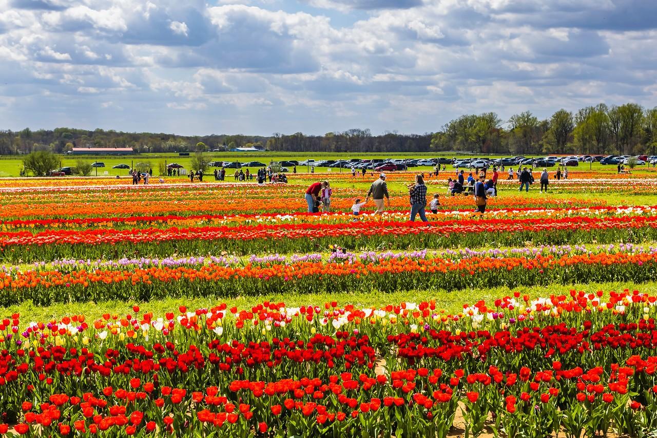 荷兰岭农场(Holland Ridge Farms, NJ),花的彩带_图1-11