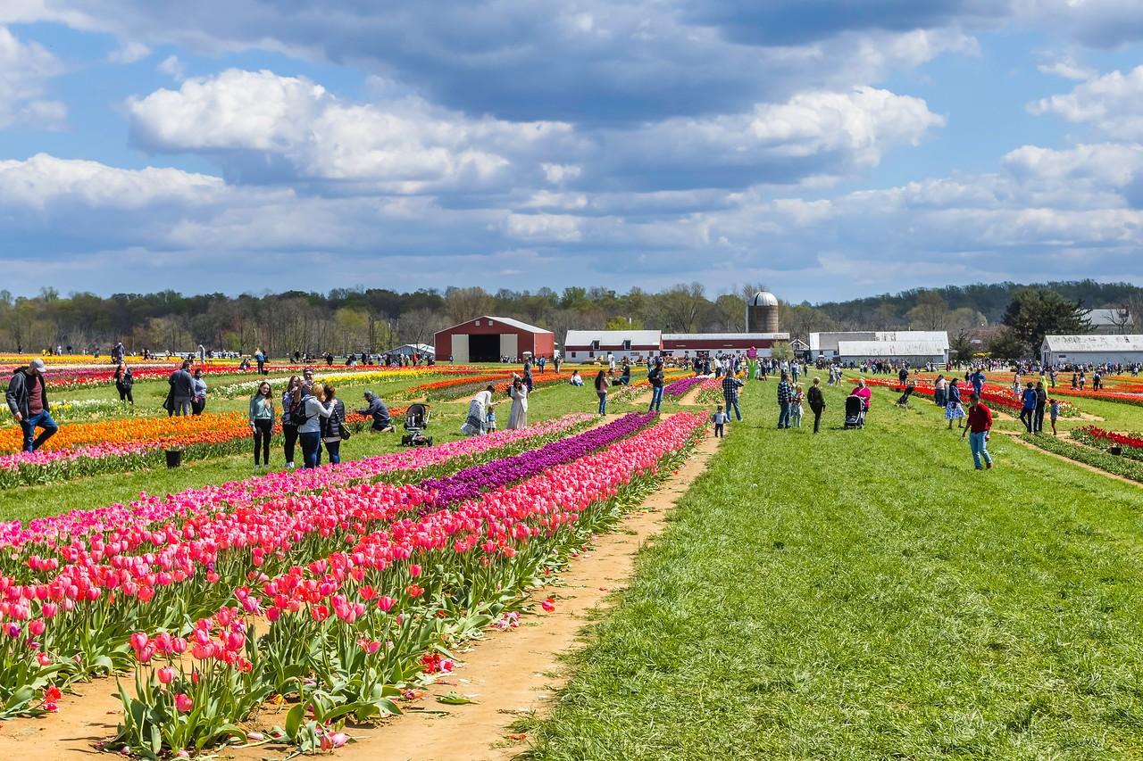 荷兰岭农场(Holland Ridge Farms, NJ),花的彩带_图1-5