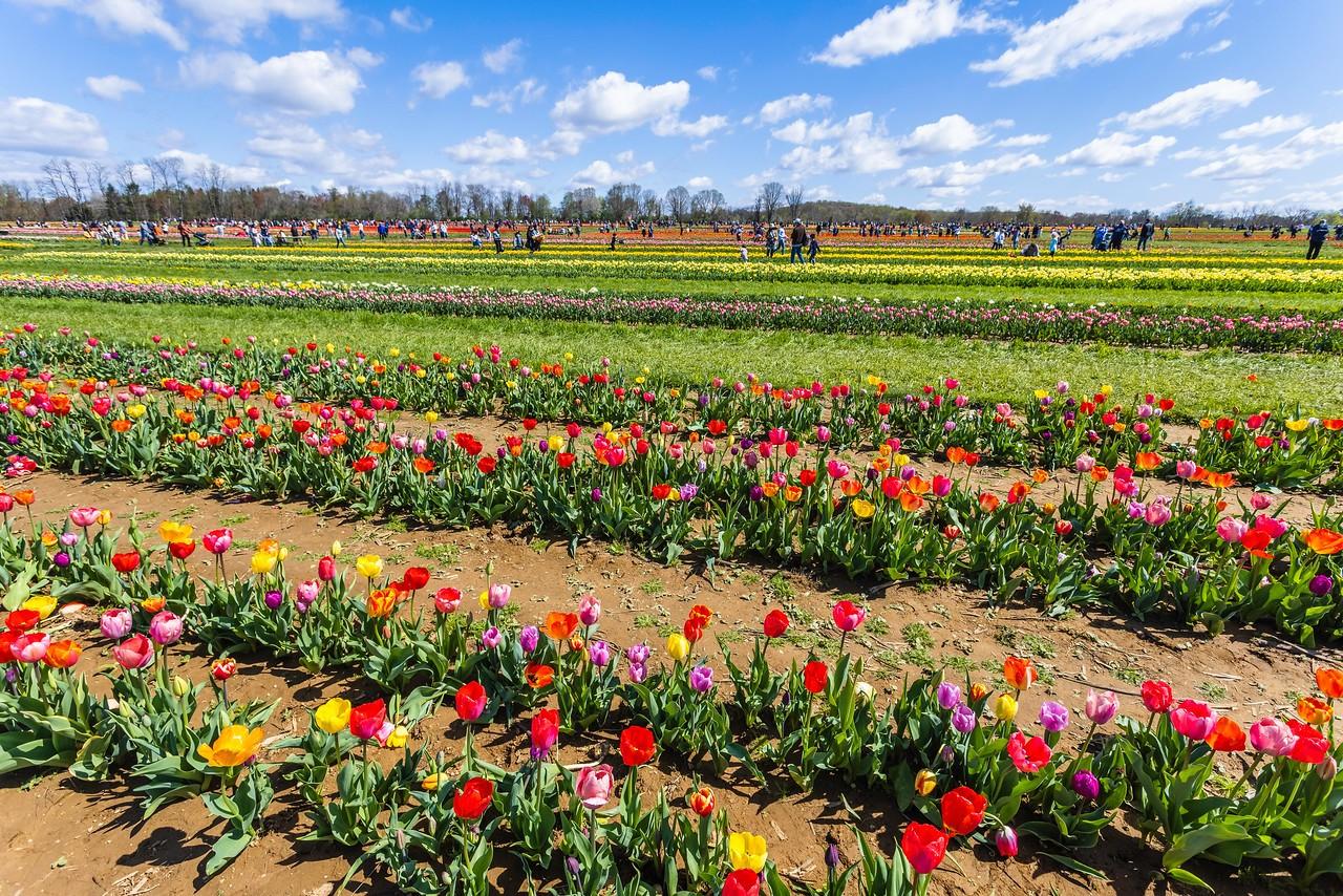 荷兰岭农场(Holland Ridge Farms, NJ),花的彩带_图1-8