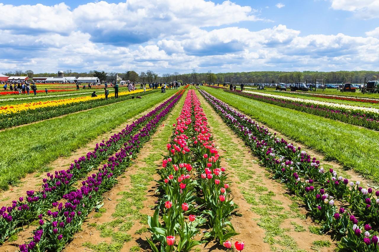 荷兰岭农场(Holland Ridge Farms, NJ),花的彩带_图1-3