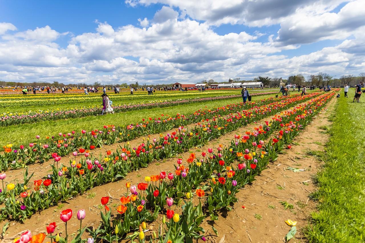 荷兰岭农场(Holland Ridge Farms, NJ),花的彩带_图1-1