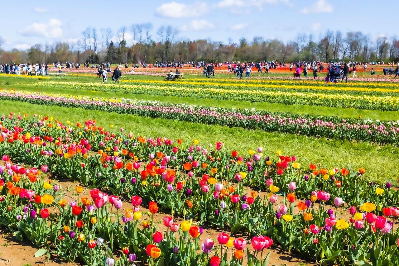 荷兰岭农场(Holland Ridge Farms, NJ),花的彩带_图1-4