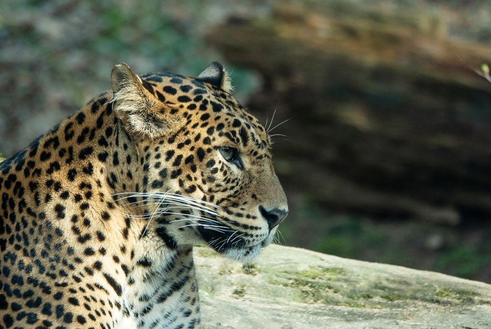 贝克塞.贝尔亨野生动物园-2_图1-6