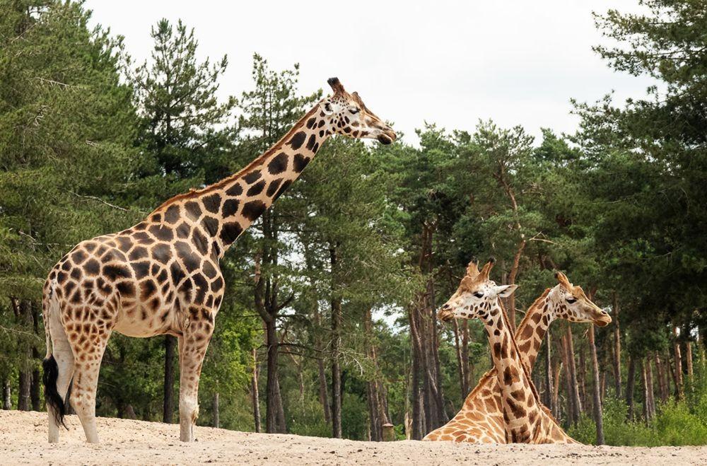 贝克塞.贝尔亨野生动物园-2_图1-18