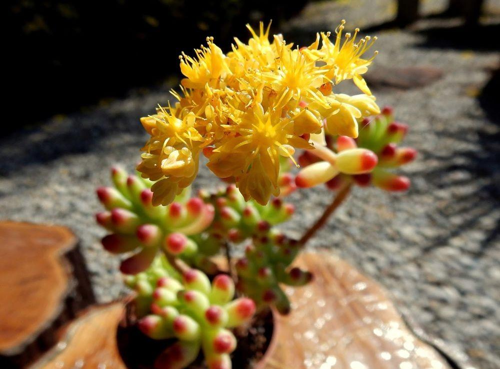 花卉日记-49_图1-3