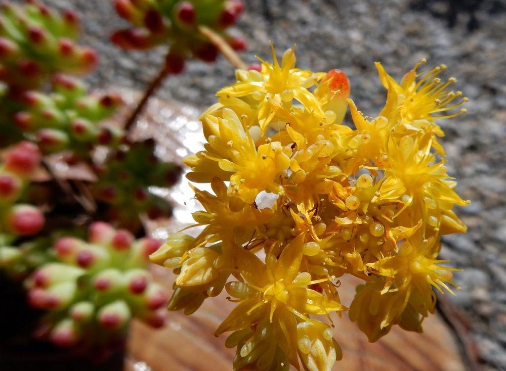 花卉日记-49_图1-4