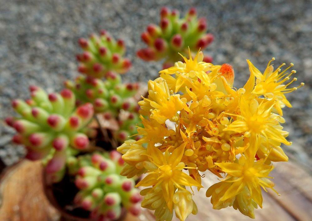 花卉日记-49_图1-5