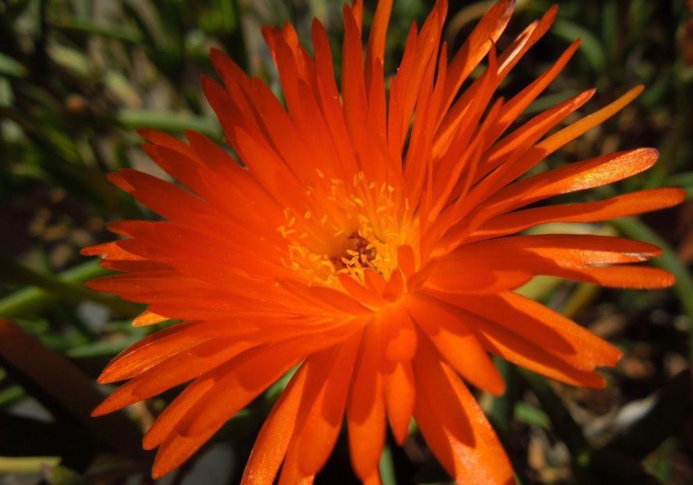 花卉日记-49_图1-6