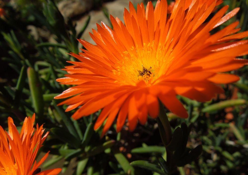 花卉日记-49_图1-7