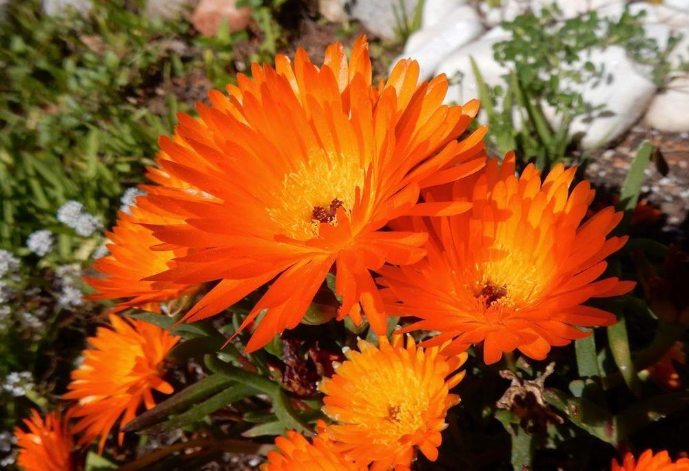 花卉日记-49_图1-8