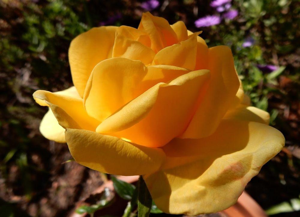 花卉日记-49_图1-11