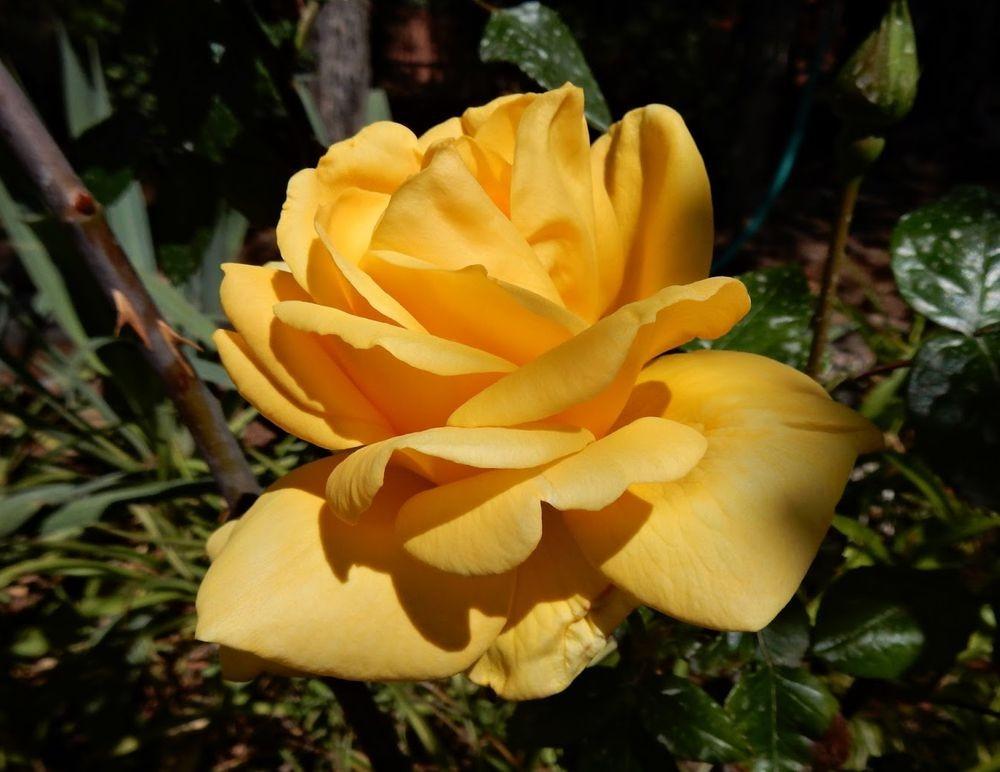 花卉日记-49_图1-12