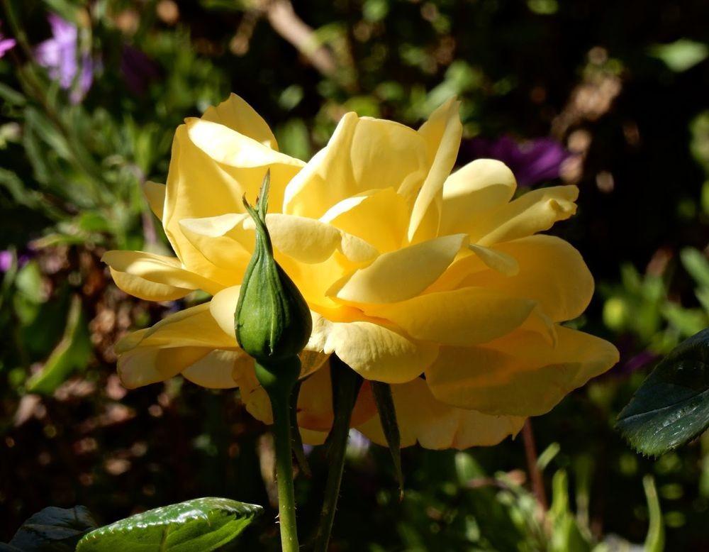 花卉日记-49_图1-13