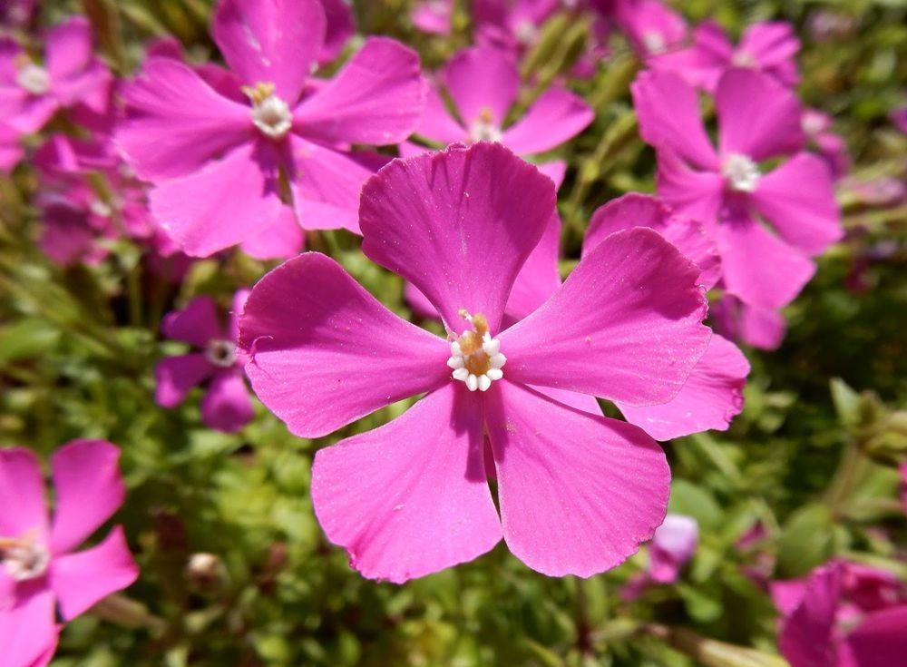 花卉日记-49_图1-14