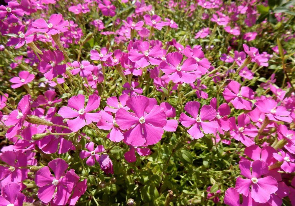花卉日记-49_图1-15
