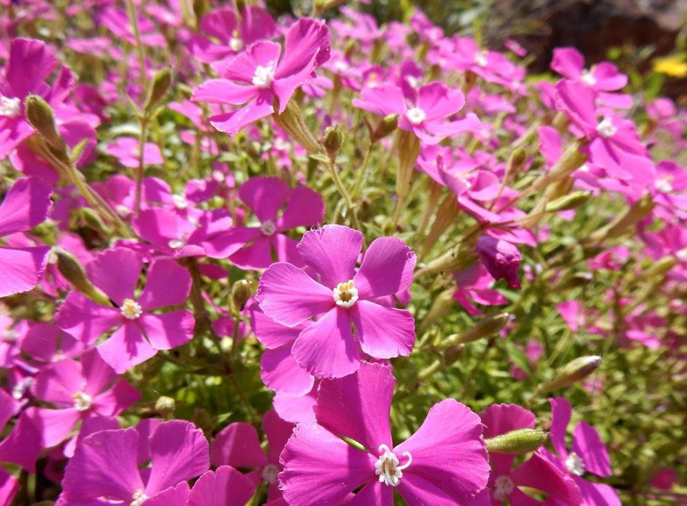 花卉日记-49_图1-16