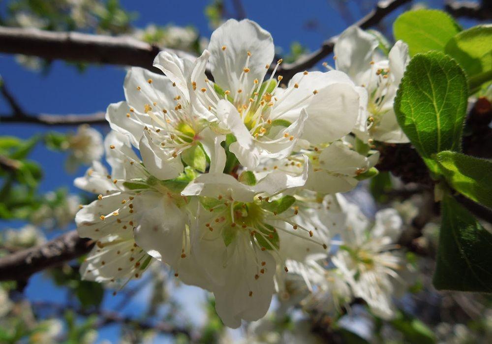 花卉日记-49_图1-17