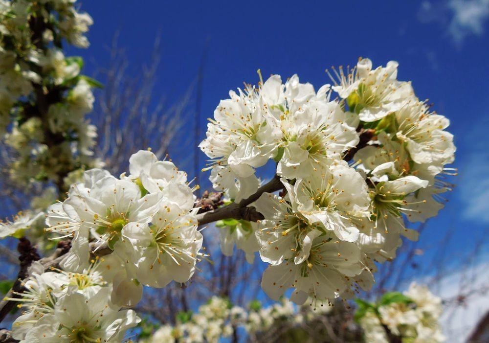 花卉日记-49_图1-18
