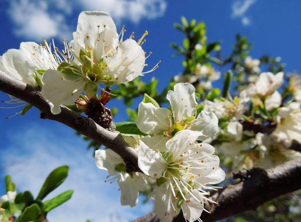 花卉日记-49_图1-19