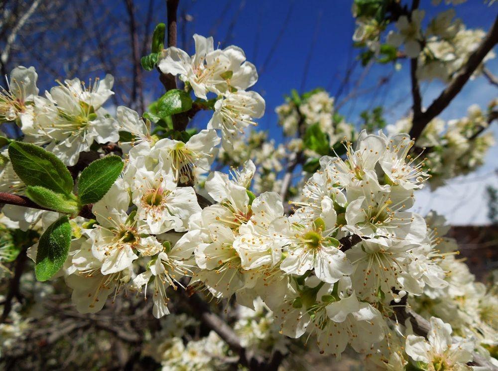 花卉日记-49_图1-20