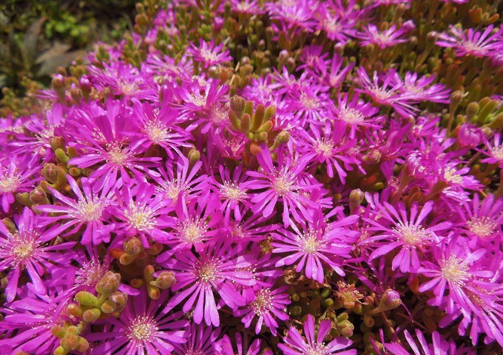 花卉日记-49_图1-22