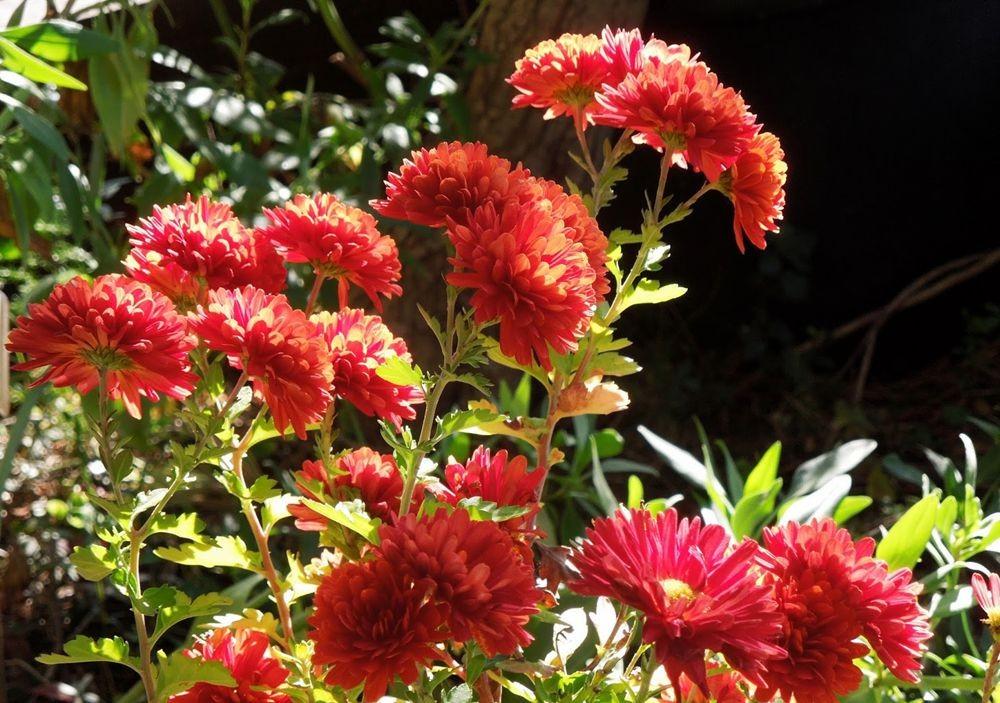 花卉日记-49_图1-2