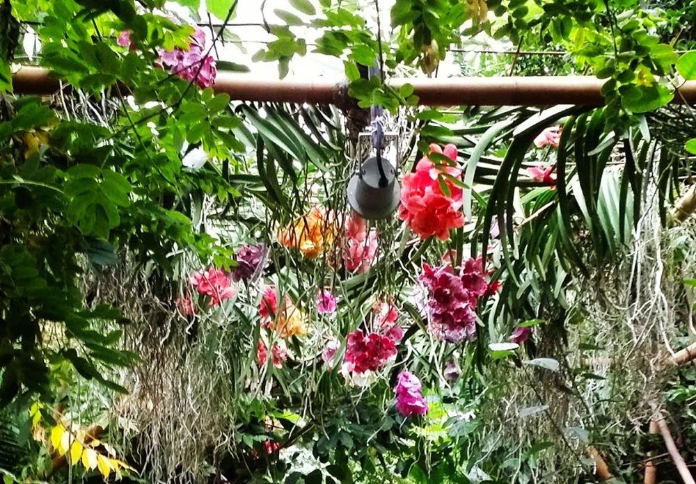 参观梅斯植物园_图1-14