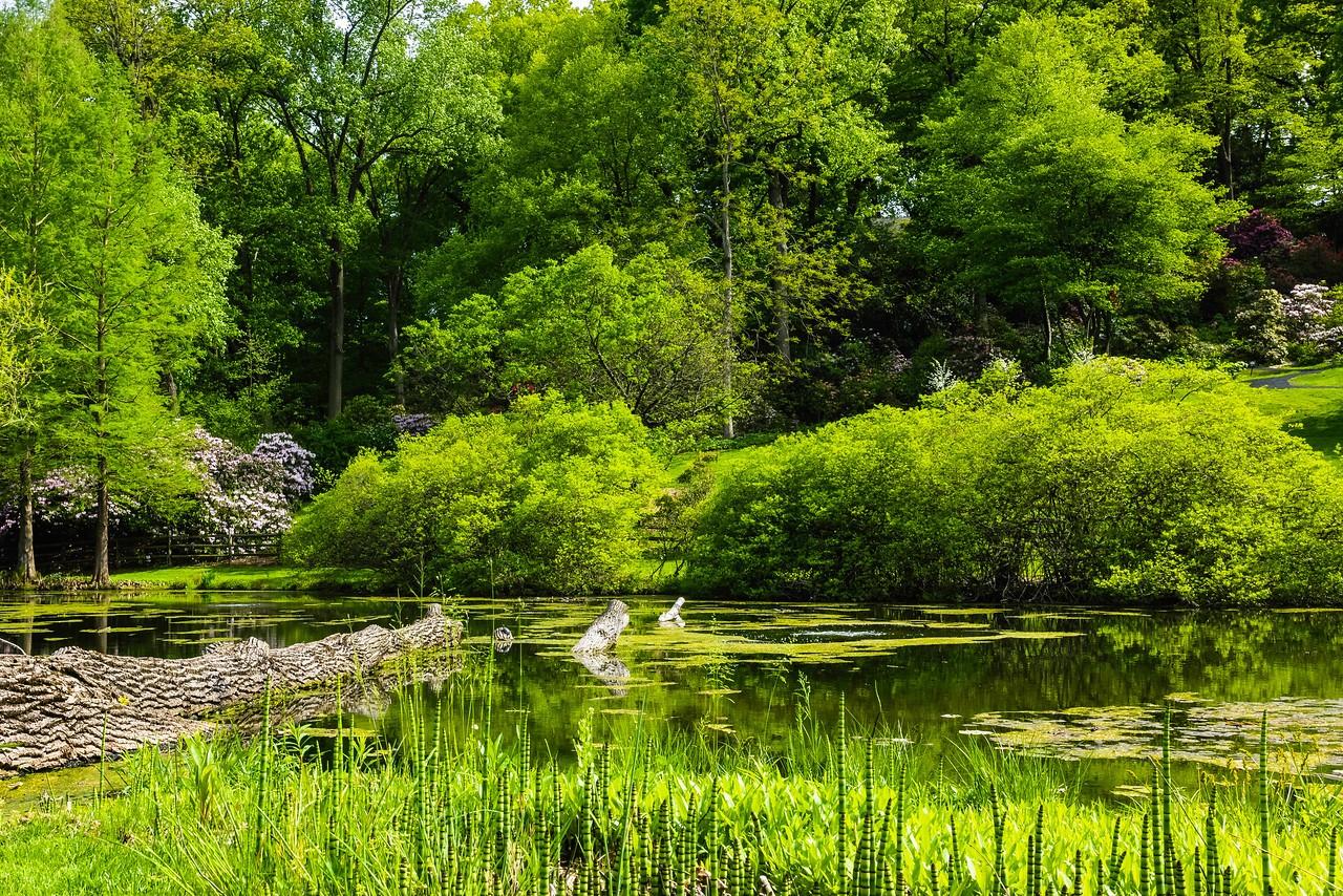 滨州詹金斯植物园(Jenkins Arboretum),景色宜人_图1-12