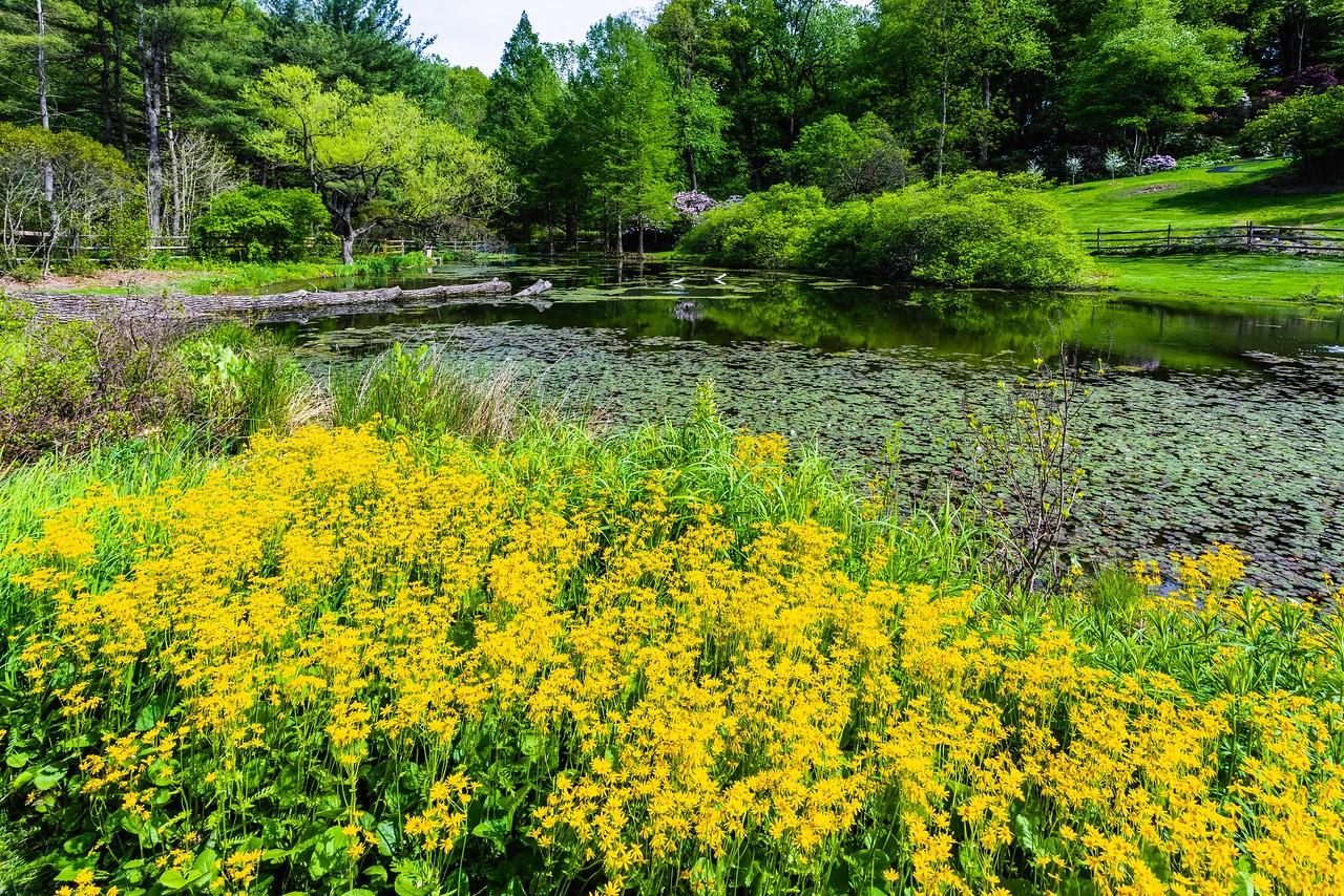 滨州詹金斯植物园(Jenkins Arboretum),景色宜人_图1-9