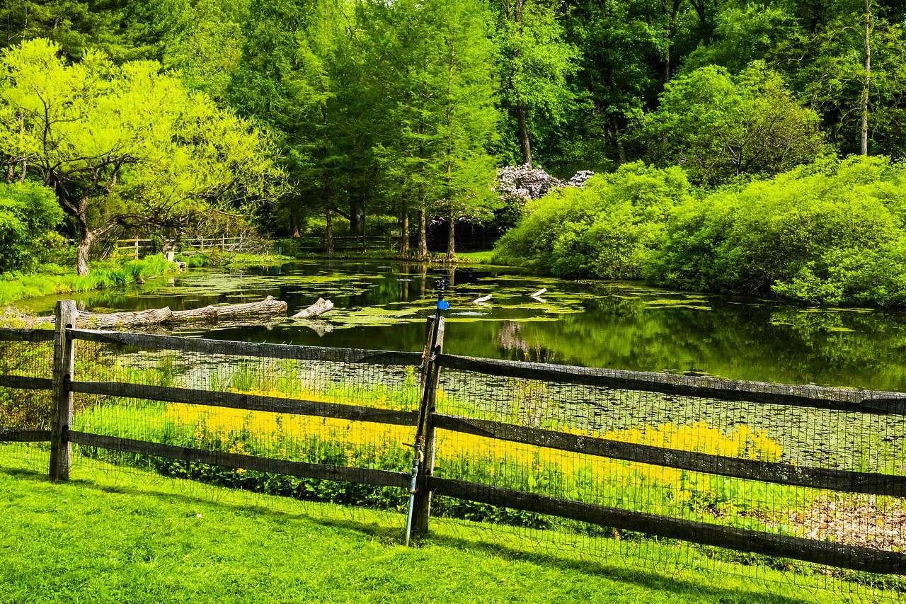 滨州詹金斯植物园(Jenkins Arboretum),景色宜人_图1-4