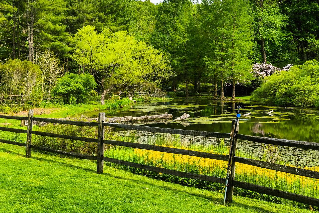 滨州詹金斯植物园(Jenkins Arboretum),景色宜人_图1-2