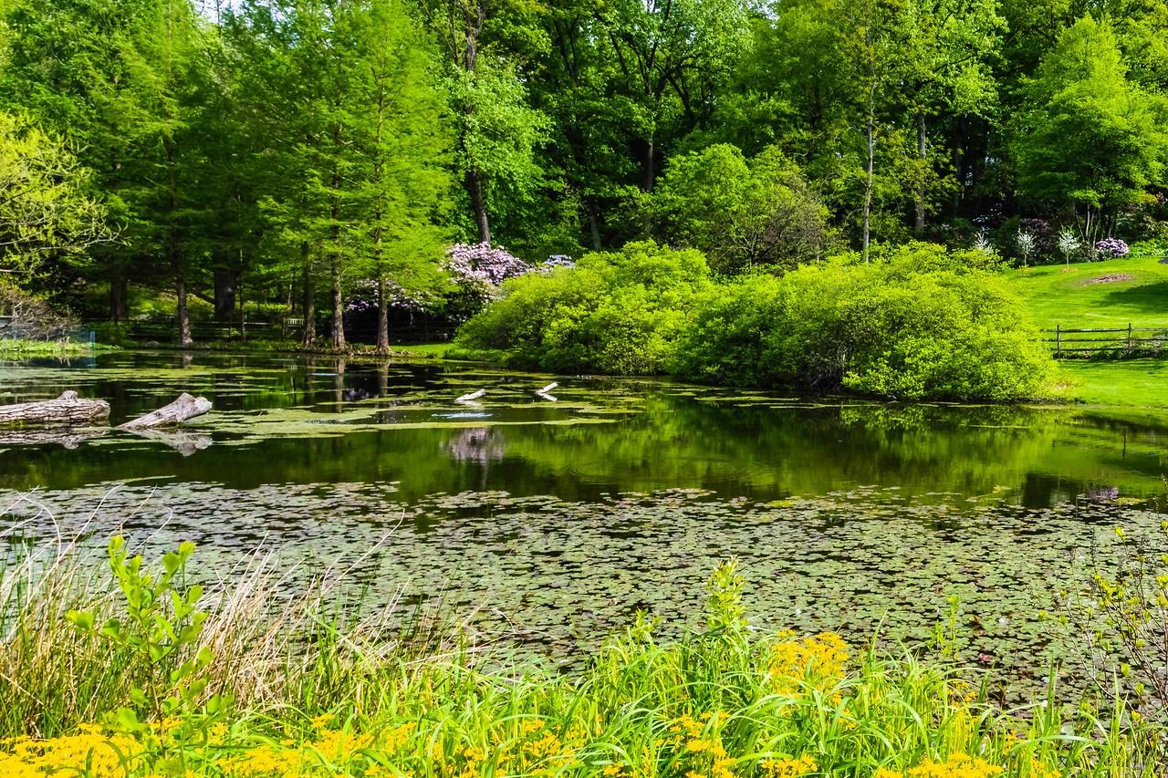 滨州詹金斯植物园(Jenkins Arboretum),景色宜人_图1-5
